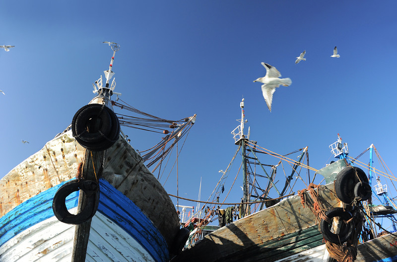 Seagulls flying over the squid boats in the harbour, Dakhla, Morocco