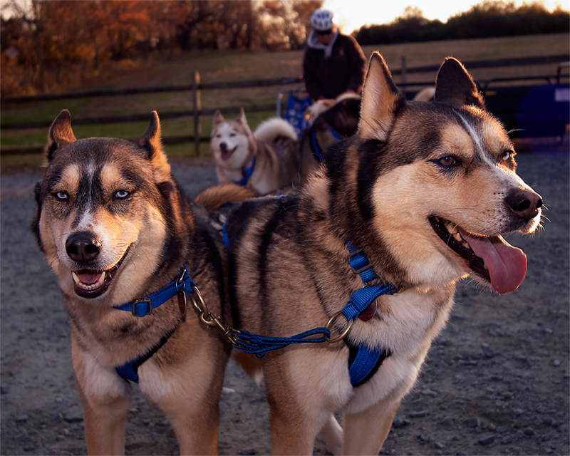 Capturefile: E:\sled_dogs\DSC_0020.NEF<br /> CaptureSN: --.000000<br /> Software: Capture One PRO for Windows