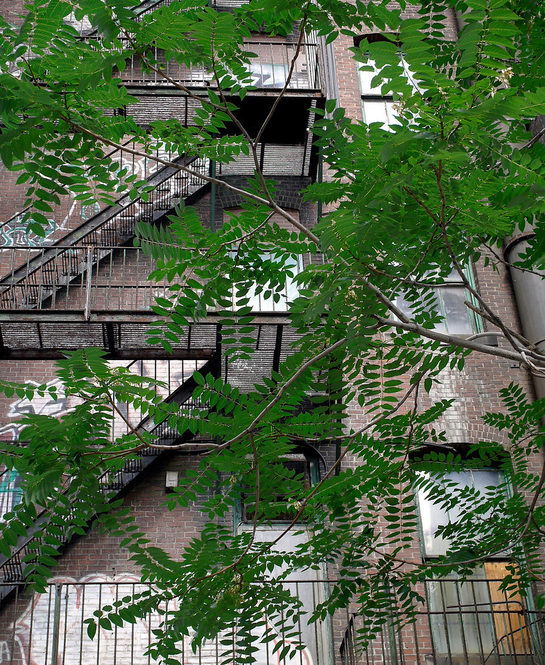 Camouflage<br />  South Boston<br /> <br /> Parsley sprigs, strategically placed certainly dress up a dinner plate at your favorite restaurant. In this scene, the greenery also adds a visual garnish. But unlike potted plant life indigenous to aerial fire escapes, these Southie arbors add that special softening touch without blocking the all important EXIT. <br /> <br /> That's a win-win: good for the eyes; good for the apartment dwellers.