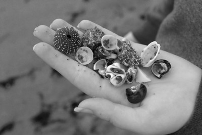 Shells-IMG_5709