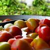 """Exquisitos tomates estaban preparados para ser picados para los """"huevos pericos"""" para el desayuno."""