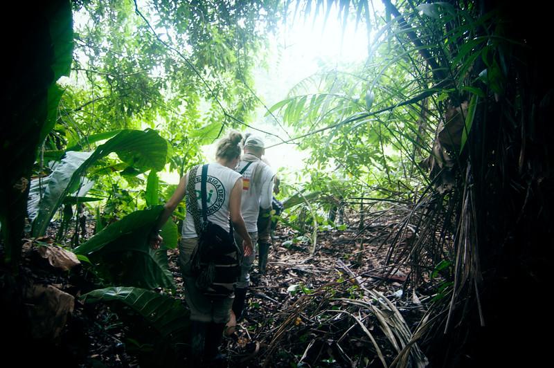 Para mirar el impacto sobre el medioambiente, pasamos por un bosque nativo todavía intacto – al final éste también se va a ver afectado.