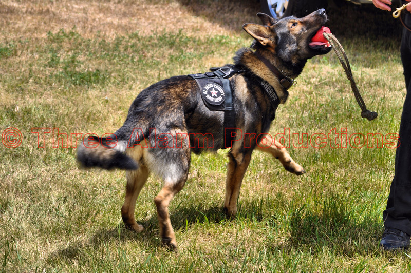 This is Axel, a member of the El Paso County Sheriffs Office K-9 Unit.