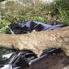 Tree smashes car