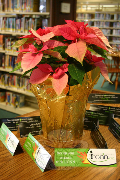 A poinsettia plant, one of a few that have been placed in the Young Adult Department at C.H. Booth Library this holiday season.  (Hicks photo)