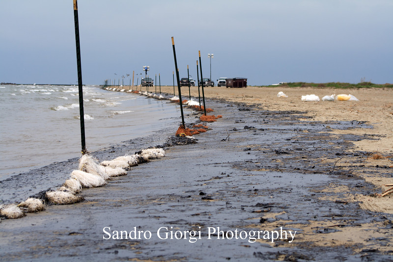 A collision between a barge and a ship near the Texas City Dike spilled heavy oil into the Houston Ship Channel. Photos from March 23/24/27, 2014 on the Eastern end of Galveston near the ship channel.