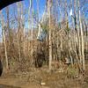 Hurricane Katrina damage - debris in trees