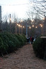 Shoppers look at the trees available at the Cabin John Park Fire House.