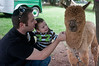 Zachary Mannes from Olney and his one-year-old son, Jonah pet Teddy the alpaca.