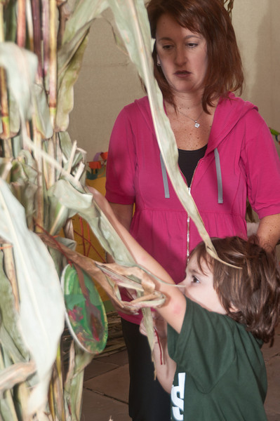 Teacher Melissa Frintz helps 4 year old Jack Potash hang deorations from the dried corn plants.