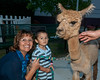 "Nicholas Carranza (2 1/2 years old) with his grandmother Noemi Rivas and ""Teddy"" the Alpaca from Squeals on Wheels."