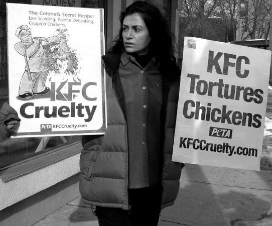 PETA: KFC Protest Feb. 7