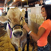 Junior Fair beef livestock auction :