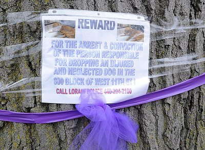 A reward sign on a tree along the Justice for Herbie dog walk on Dec. 9.  Steve Manheim