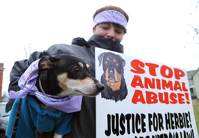 Katie Noble, of Amherst, with Dude, a rat terrier, at a 'Justice for Herbie' dog walk, at Streator Park  in Lorain on Dec. 9.  The walk calls attention to  animal abuse and neglect in the wake on the abused Herbie, found by police on W. 11st in Lorain.  Steve Manheim