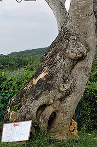 bear hugging tree. certainly looks like one