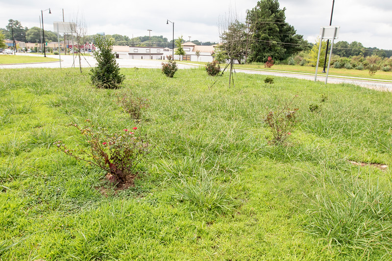 Overgrown Green Space In Fayetteville, Georgia