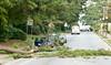 Fallen Tree Fayetteville