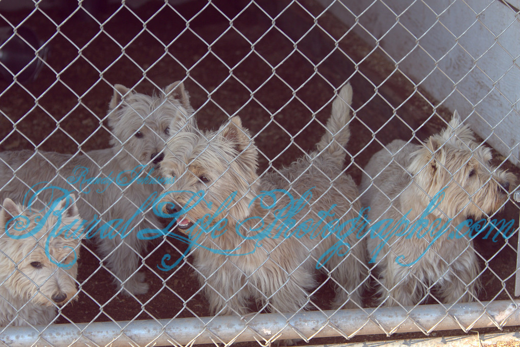 Shots of the rescued dogs.