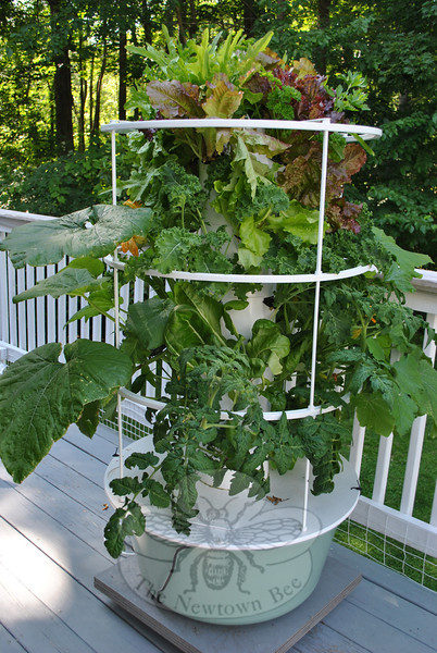 The Tower Garden on Liz King's back deck is overflowing with greens, only six weeks after planting.   (Crevier photo)