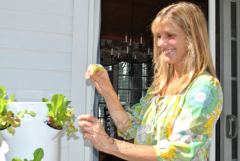 Just two weeks after transplanting her seedlings into the Tower Garden, Doris Hanley harvested her first lettuce crop.   (Crevier photo)