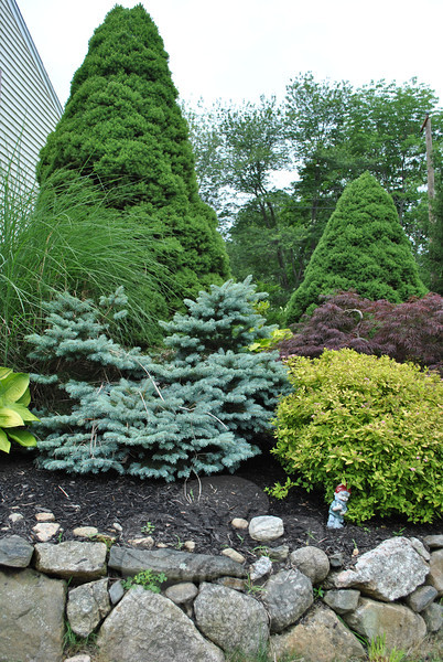Blue-green spruce, lime yellow and pink leaves of spirea, red leaf maple, deep green fir trees, and delicate leaves of ornamental grasses work together to provide color in the gardens of Dick and Margaret Kovacs, without using annual flowers.   (Crevier photo)