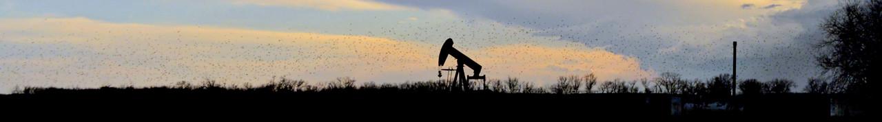 2015 Fleeing Birds Indian Hills Road