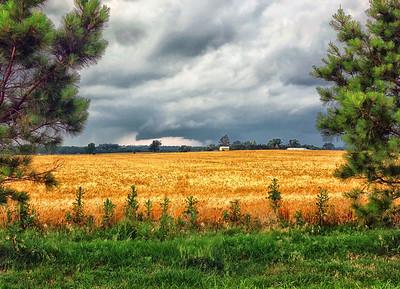 Noble OK wheat field