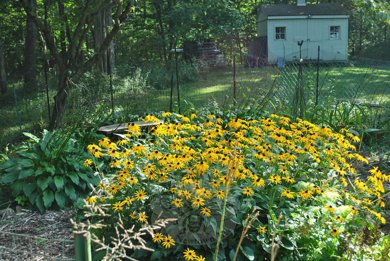 Cindy Miller's garden. (Crevier photo)
