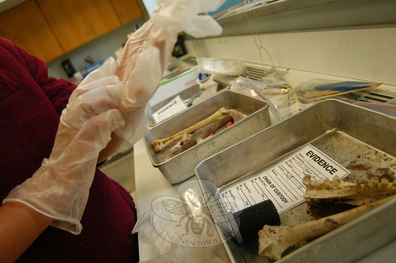 A student sorted through evidence during an Amazonian Crime Scene camp on Wednesday, August 1. (Hallabeck photo)
