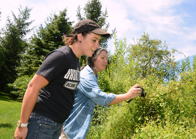 Nicole Gabelman, with the University of Connecticut plant science department, works with research entomologist Carole Cheah, PhD. The two are among a small environmental-minded team that surveyed a weevil site Tuesday. (Bobowick photo)