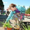 Giving away household plants including aloe, Swedish ivy and fern during the second annual Victory Garden Harvest Festival was festival guest Pamela Wilson.   (Bobowick photo)