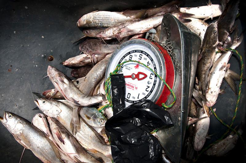 La comunidad también vive de la pesca. En el mar los pescadores atrapan toyo, raya y tortuga y en el río sábalo, sardinas, mojarra y camarón.