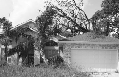 Tree rests on a home one year post Hurricane Katrina, New Orleans.