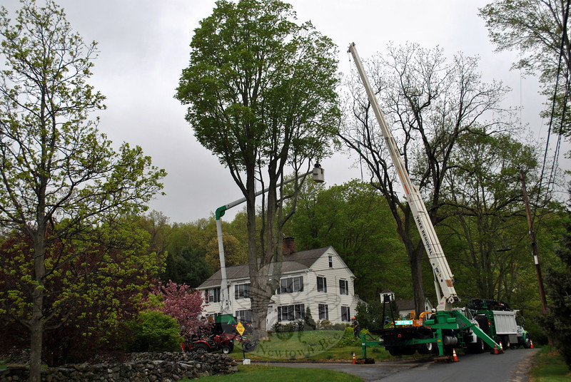 Using its own 23½-ton Terex crane, a 75-foot Hi Ranger bucket truck, and huge Bush Bandit wood chipper, Al Potter's crew from Newtown Arbor Specialists Inc made short work of a 100-foot tall sugar maple tree on Head O' Meadow Extension Thursday morning, May 9. The 150-year-old maple had to be removed due to decay. Spotty rain showers did not deter the crew from swiftly completing the job. Using a top-down method of tree removal is a safe and effective way to cut large trees, says Mr Potter. (Crevier photo)