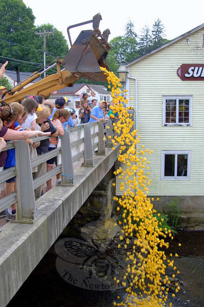 Attendees of The 12th Annual Great Pootatuck Duck Race counted down and then watched as 3,805 rubber ducks were dumped into the Pootatuck River shortly after 2 pm.   (Bobowick/Bee file photo)
