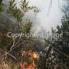 WILDLAND FIRE