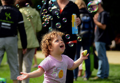 9/22/13 Brookline- Yonah Reiter, 3, of Brighton, chases bubbles around in front of the Sports Club/LA table during Sunday's Brookline Day at Larz Anderson Park. Photo by Sean Browne, Brookline Tab