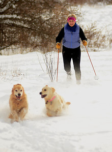 12/30/12 Medfield- Claire McCarthy, of Sherborn, cross country skies around William McCarthy Memorial Fields, in Medfield, with her Golden Retrievers, Kona (left) and Lani (right), after Sunday morning's snow storm. Photo by Sean Browne, Medfield Press
