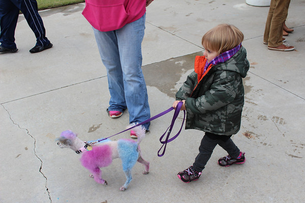 Olivia LaRue, 2, walks Saturday at Animalfest with a poodle, Demi, that has been dyed purple and pink. Special photo by Travis Sloat