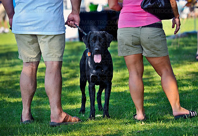 As usual, dozens of great dogs lead their humans around Art on the Lake on Excelsior Commons Sunday, June 10, 2012.  The popular South Lake Minnetonka art fair is in its 32nd year.