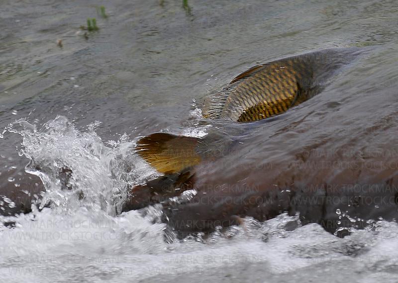 LAKE MTKA INVASIVE SPECIES THREAT