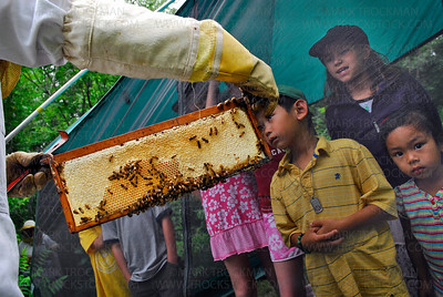 A section of beehive called a panel is held up for inspection by (left to right) John Henry Raidt, 6, Kamre Vanacek, 8, and Ming Li Raidt, 3, at Lowry Nature Center in Victoria Sunday, July 27.