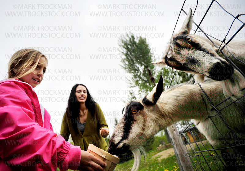 A trip to Minnetrista's Big Stone Mini Golf & Sculpture Gardens includes feeding the many animals on site such as goats and pigs.  Here, Emila Valentini from Argentina gets extra attention from the livestock as her mom, Mercedes, looks on, Tuesday, May 24.