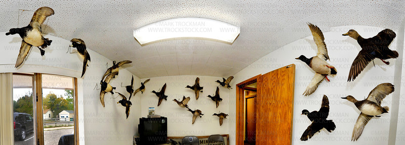 A room ringed by a variety of Minnesota waterfowl in the the Minnesota Waterfowl Hall of Fame Museum in Hopkins, Wednesday, Sept 21, 2011.