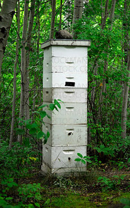 A bee hive at Lowrey Nature Center, Carver Park, Victoria, Minn.