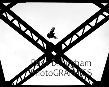 A pigeon looks for a place to land on top of the bridge truss of the walking trestle that connects Simard Payne Park in Lewiston to Bonney Park in Auburn Wednesday afternoon.