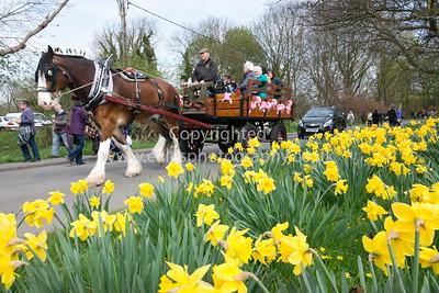 Thriplow Daffodil Festival 2014