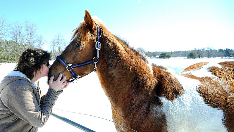 Elva Harrison of Poland kisses one of 6 horses that got loose from the Puf and Pas Stable in Mechanic Falls after it got loose Thursday afternoon.  When stable owner Kenny Sumner was at work, the race horses somehow got the gate opened and ran off.  Harrison, police officers from Mechanic Falls and Androscoggin County Sheriff Officers as well as several other area residents helped corral the race horses.
