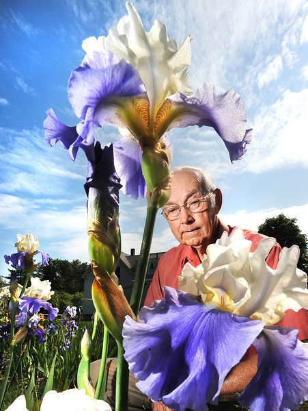 Russ Moors works in his Auburn garden,  looking for flowers to show in this Saturday's Maine Iris Society Show at the Auburn Middle School.  The public is invited to attend, free of charge, from 1:30-4:30.  In this photo he is examining a Tall Bearded Iris.